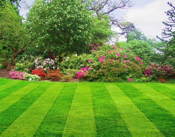 Striped Lawn Turf