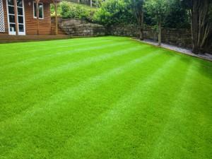 Lawn Turf