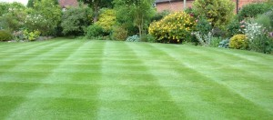 Turf gives instant results, reducing problems of weeds and moss