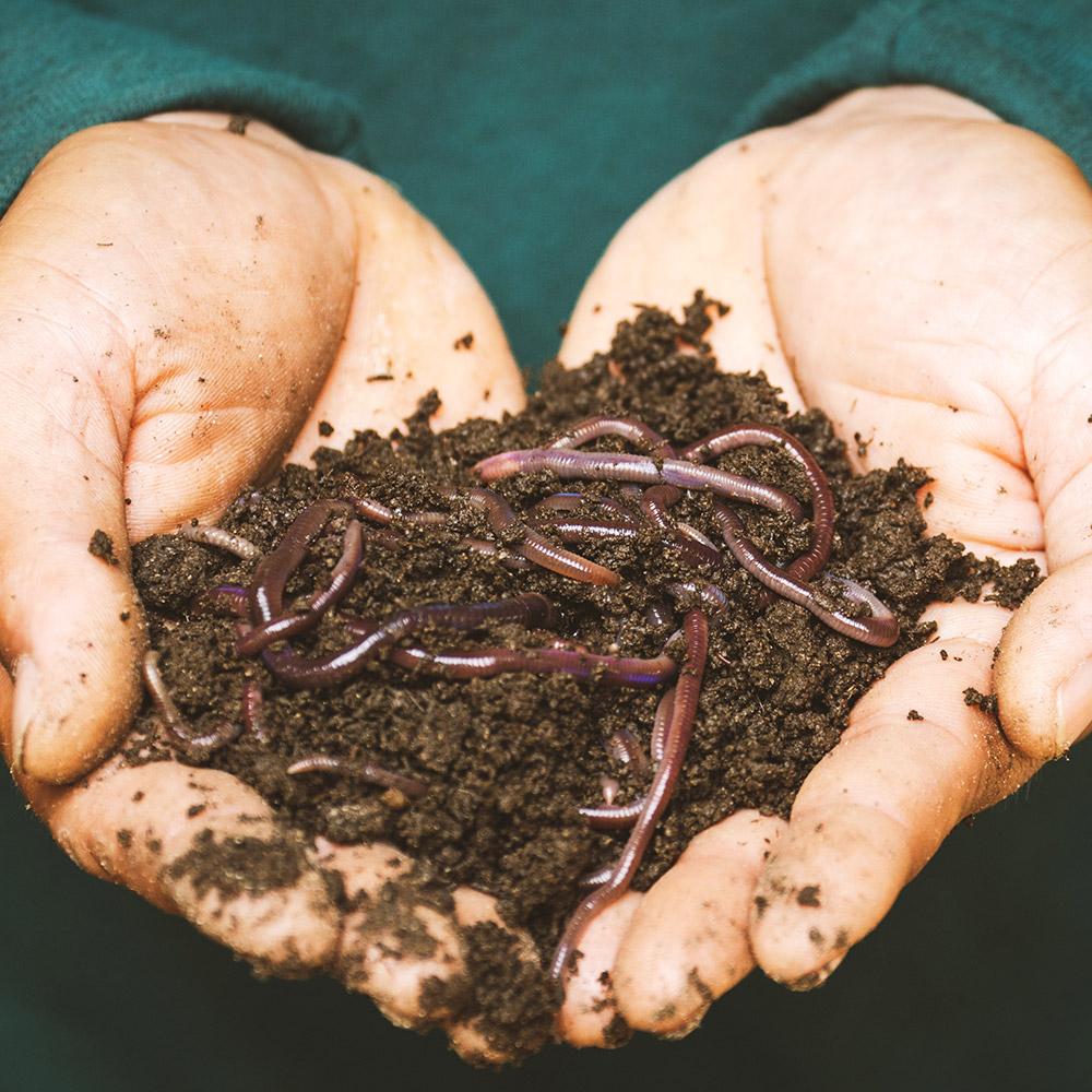 Garden turf fertiliser