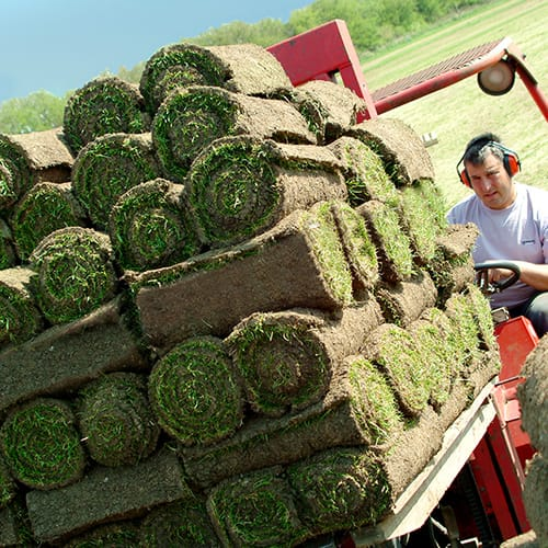 Freshly Harvested Turf